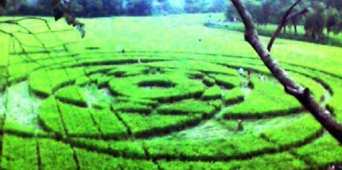 Crop Circle Adisucipto Desa Rejosari, Jogotirto, Berbah, Sleman, Daerah Istimewa Yogyakarta,