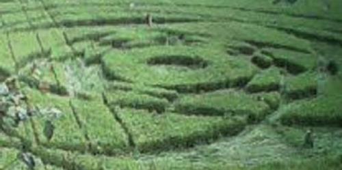 Jejak UFO Di Areal Persawahan Yogyakarta